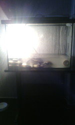 Красноухие черепахи с аквариумом